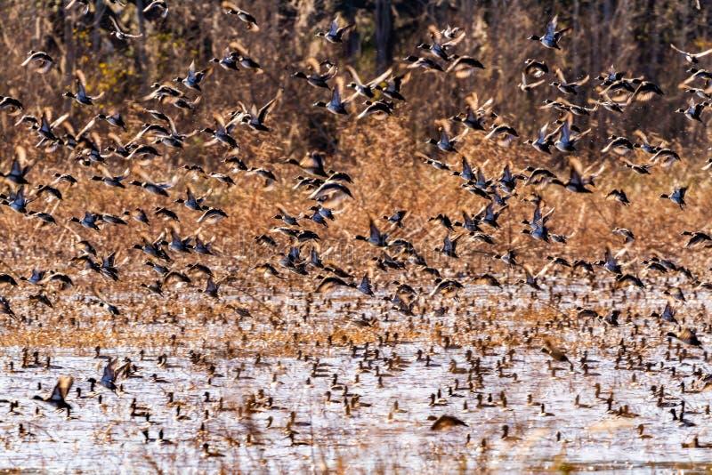 ACE Basin National Wildlife Refuge. Soith Carolina,USA stock image