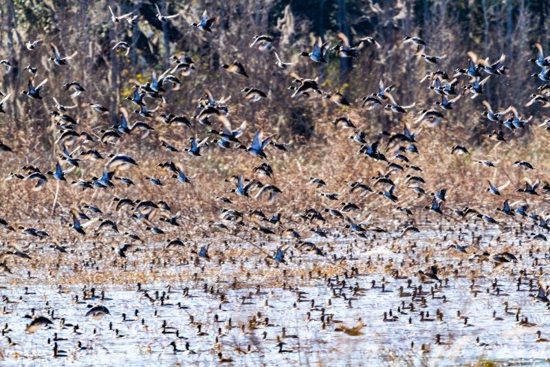 ACE Basin National Wildlife Refuge. Soith Carolina,USA royalty free stock images