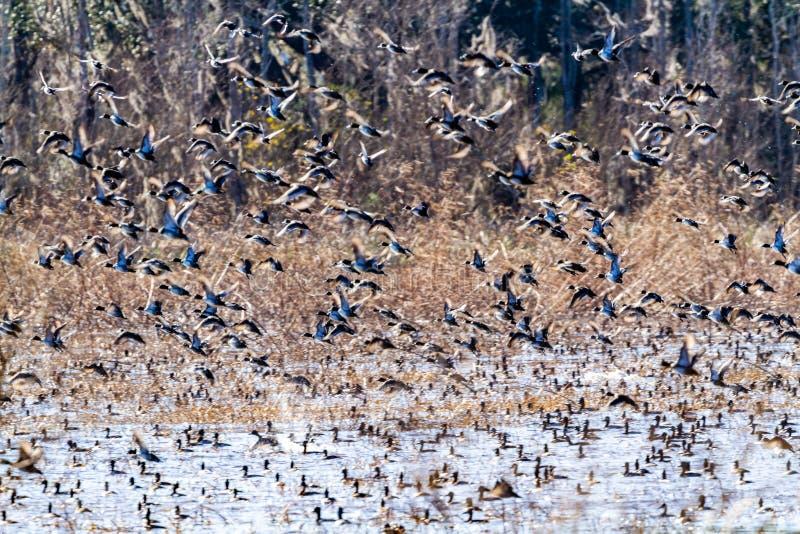 ACE Basin National Wildlife Refuge. Soith Carolina,USA royalty free stock image