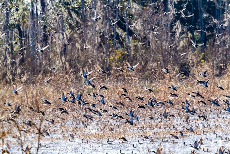 ACE Basin National Wildlife Refuge. Soith Carolina,USA royalty free stock photography