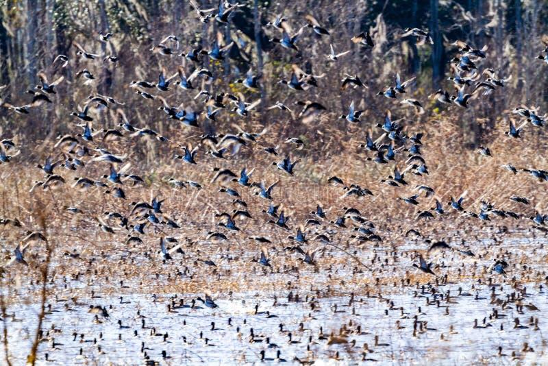 ACE Basin National Wildlife Refuge. Soith Carolina,USA stock photography