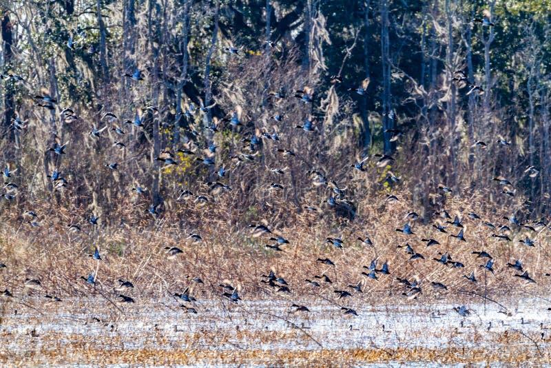 ACE Basin National Wildlife Refuge. Soith Carolina,USA stock photos