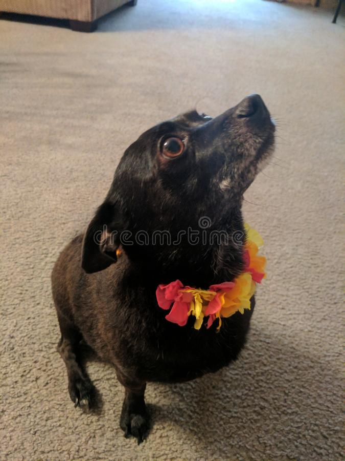 Ace le chiot de fleur photo stock