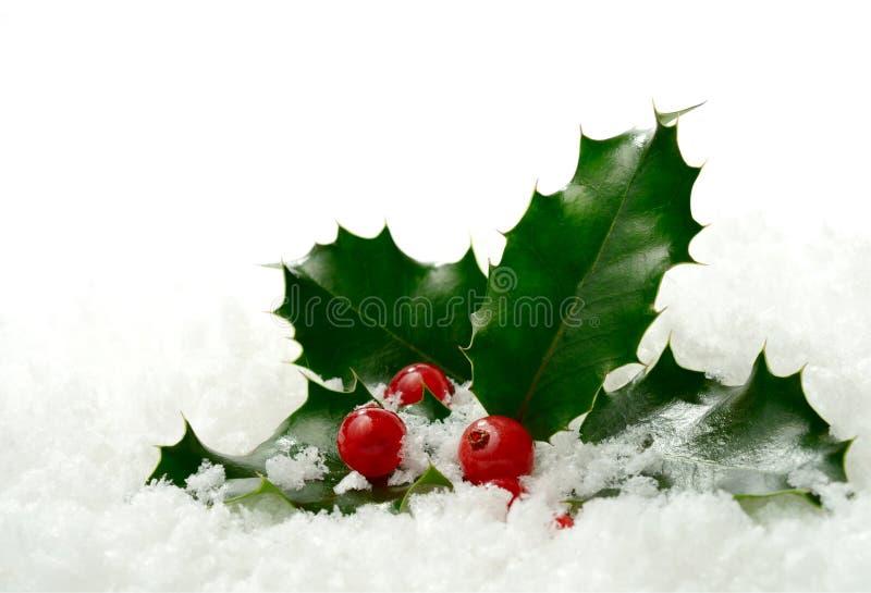 Acebo en la nieve fotos de archivo