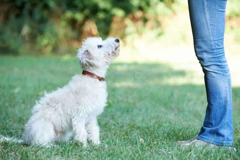 Acechador de enseñanza del animal doméstico del dueño del perro a sentarse imagen de archivo libre de regalías