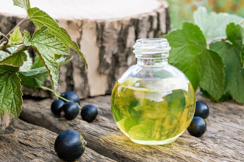 Aceite de la grosella negra en una botella en el fondo de viejos tableros Extracto de la medicina anticatarral de grosella negra fotos de archivo