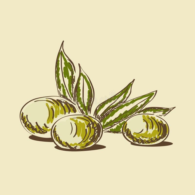 Aceite de oliva ilustración del vector