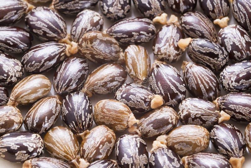 Aceite de ricino y semillas imágenes de archivo libres de regalías