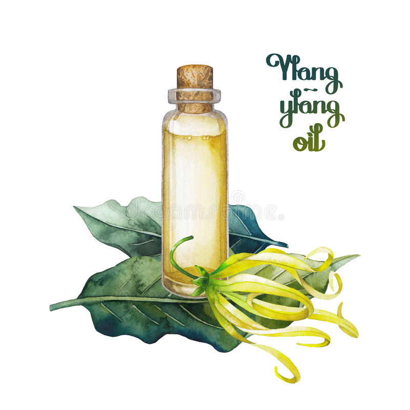 Aceite del ylang del ylang de la acuarela stock de ilustración