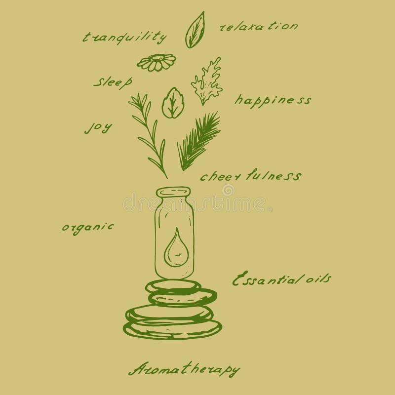 Aceite esencial de las plantas orgánicas ilustración del vector