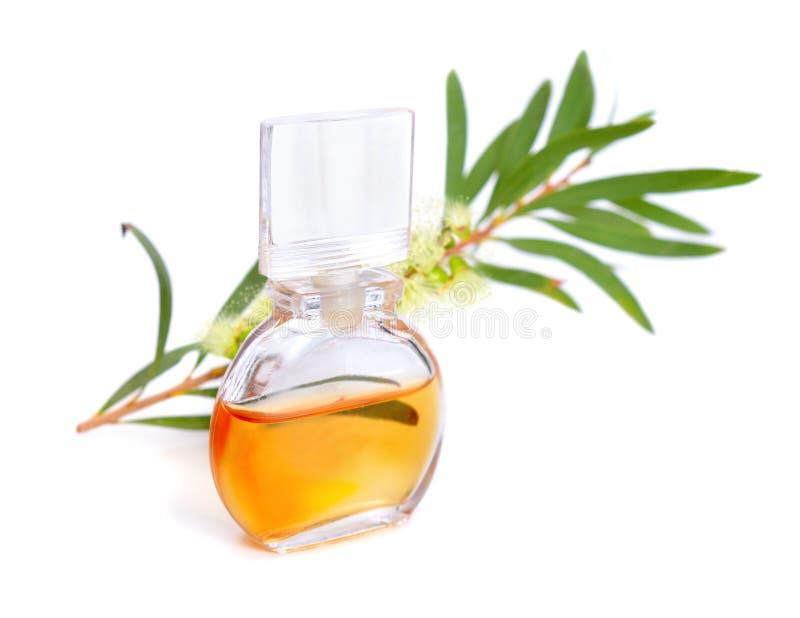 Aceite esencial del árbol del té de Melaleluca con la ramita y las flores fotos de archivo libres de regalías