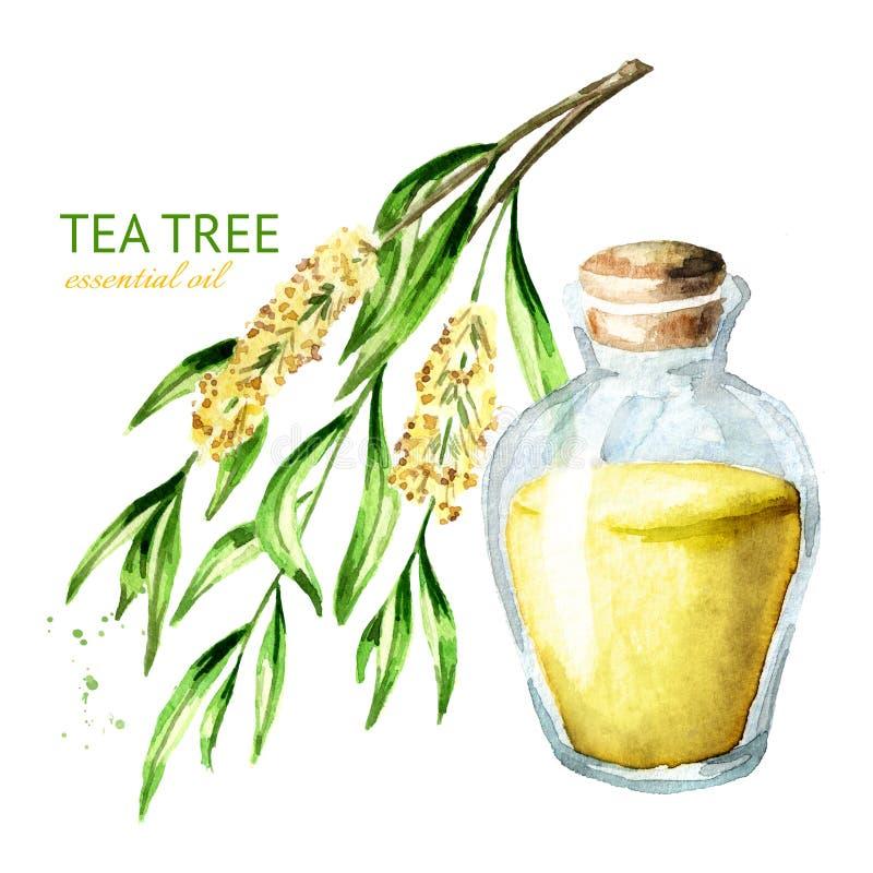 Aceite esencial del árbol del té Planta medicinal y de los cosméticos, ejemplo exhausto de la mano de la acuarela aislado en el f ilustración del vector