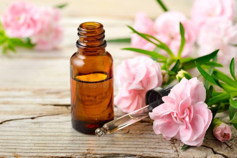 Aceite esencial del absoluto del clavel y flores rosadas en la tabla de madera imagenes de archivo