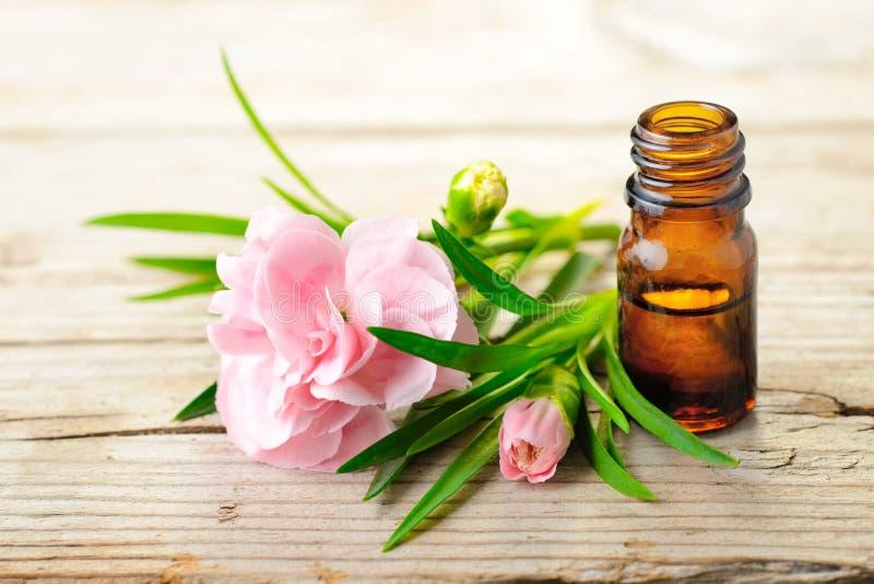 Aceite esencial del absoluto del clavel y flores rosadas en la tabla de madera fotos de archivo