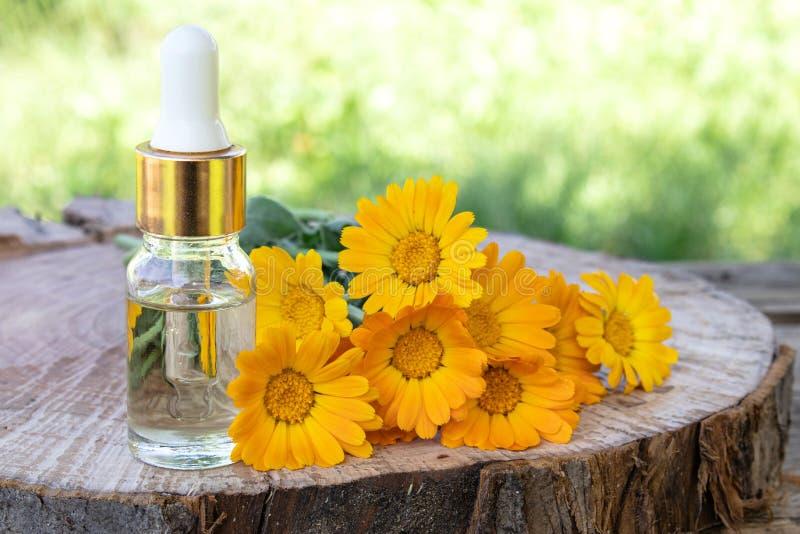 Aceite esencial del Aromatherapy con las flores del calendula en un fondo de madera en naturaleza Extracto de tinte del calendula fotos de archivo