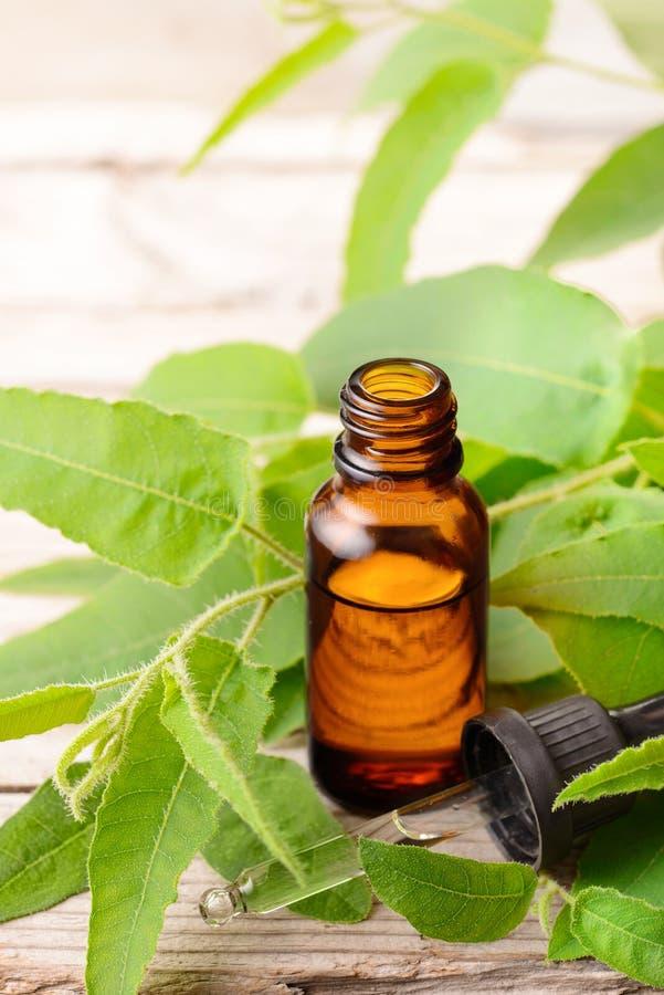 Aceite esencial del eucalipto del limón en la botella ambarina, con las hojas frescas imagen de archivo libre de regalías