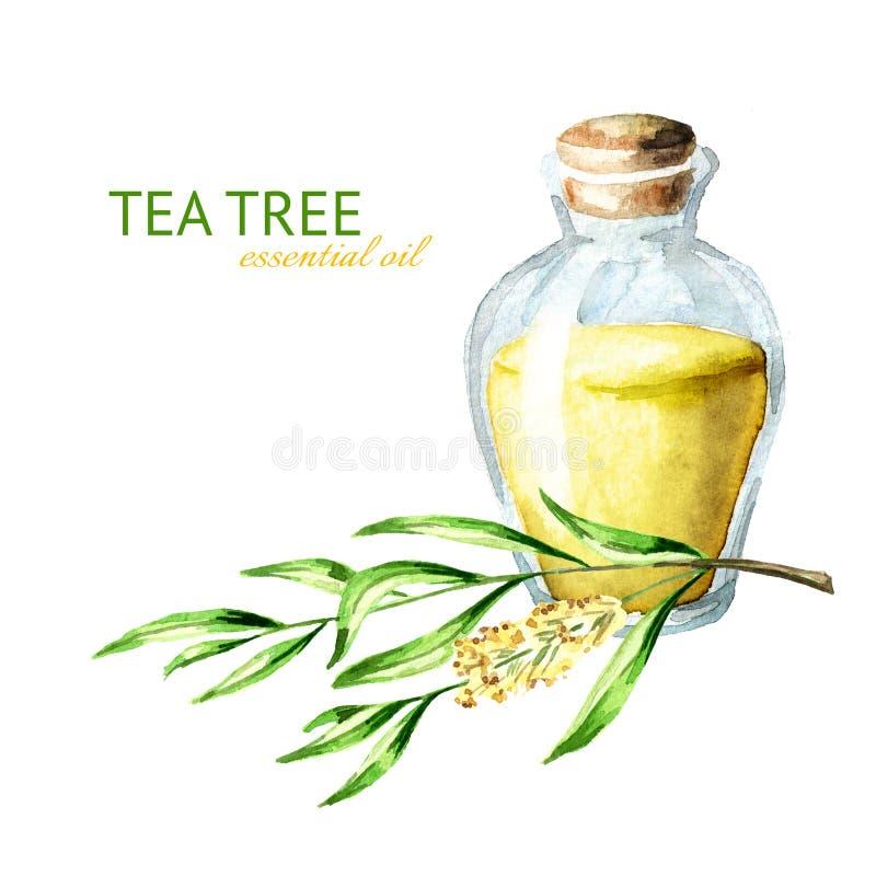 Aceite esencial del ?rbol del t? Planta medicinal y de los cosméticos, ejemplo exhausto de la mano de la acuarela, aislado en el  ilustración del vector