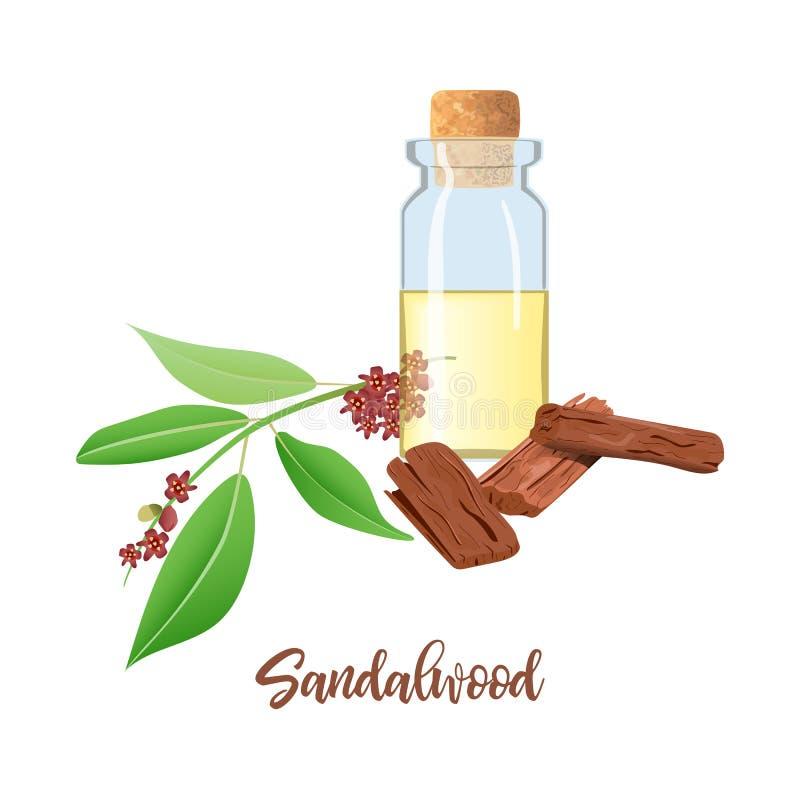 Aceite esencial del s?ndalo en la botella de cristal con el corcho, hojas de Chandan, palillos, aromatherapy, perfume, balneario, ilustración del vector
