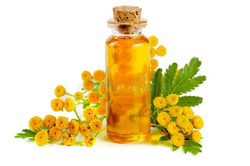 Aceite esencial del tansy con las flores y la hoja aisladas en el fondo blanco foto de archivo libre de regalías