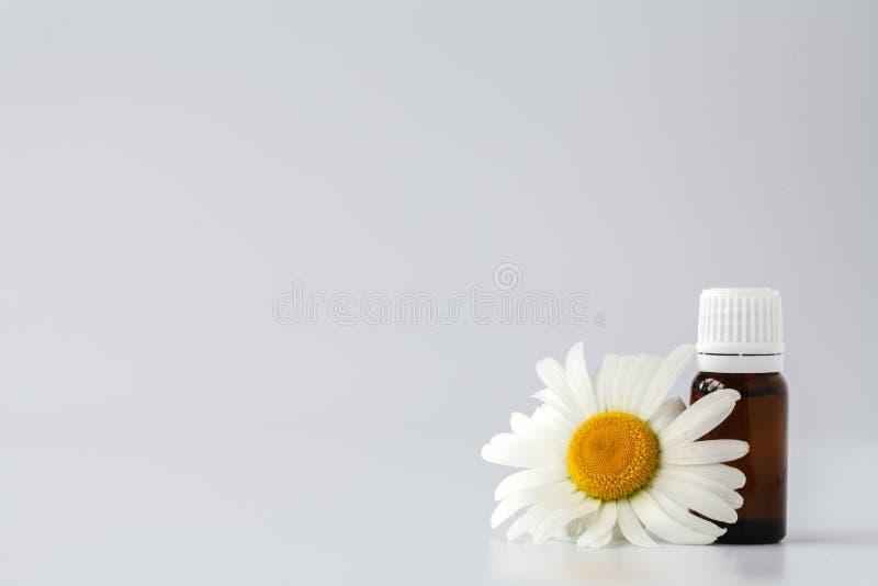 Aceite esencial del tinte de la manzanilla en botella cosmética Chamo fresco foto de archivo libre de regalías