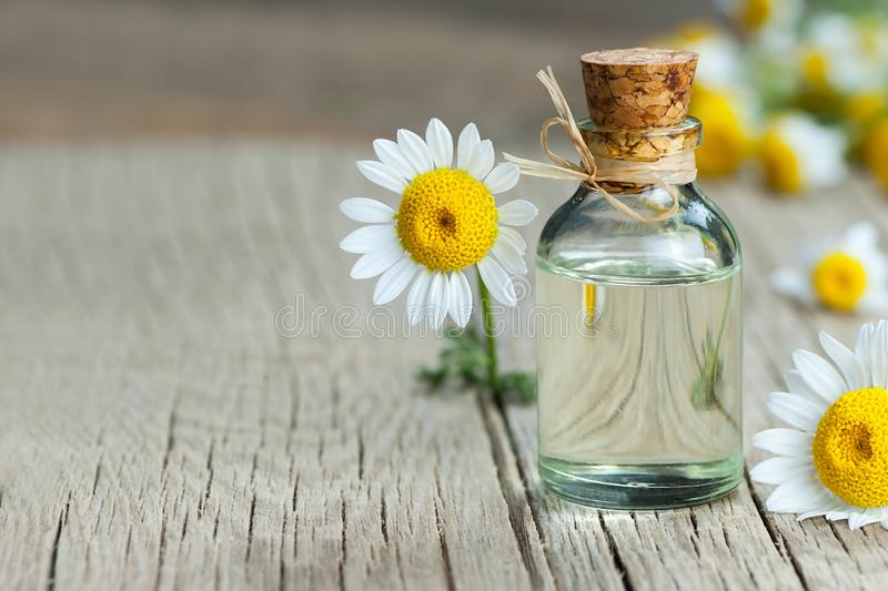 Aceite esencial en la botella de cristal con las flores frescas de la manzanilla, aceite fragante de la margarita, tratamiento de fotografía de archivo