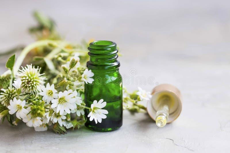 Aceite esencial herbario y del aromatherapy con las flores blancas y el MED imágenes de archivo libres de regalías