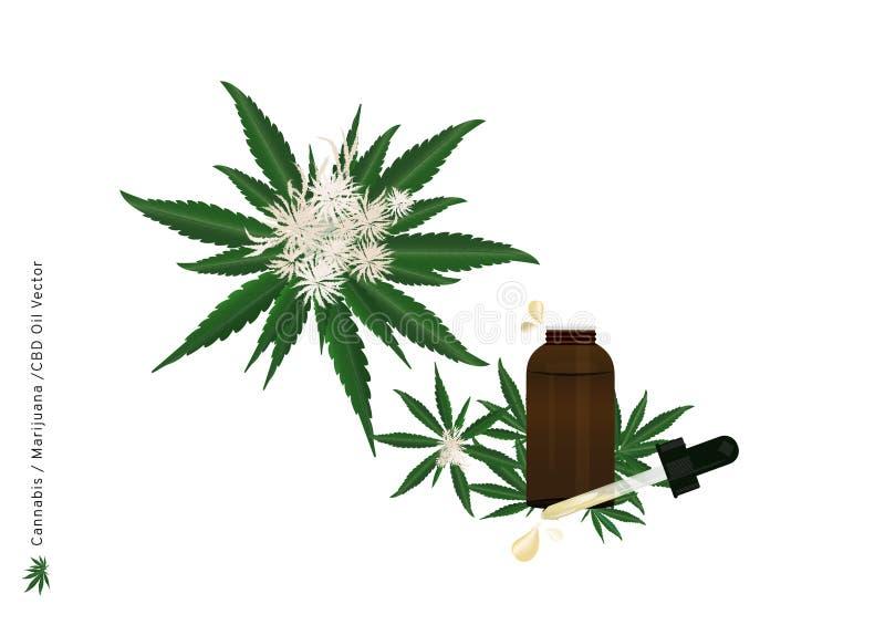 Aceite puro del extracto del cáñamo o flor y hoja de la marijuana con la tensión de CBD para el tratamiento médico para el ejempl ilustración del vector
