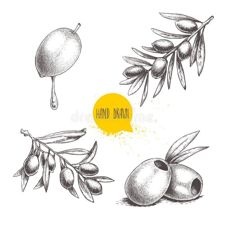 Aceitunas dibujadas mano del bosquejo fijadas Fruta verde oliva con descenso del aceite, aceitunas sin hueso y ramas de olivo con stock de ilustración
