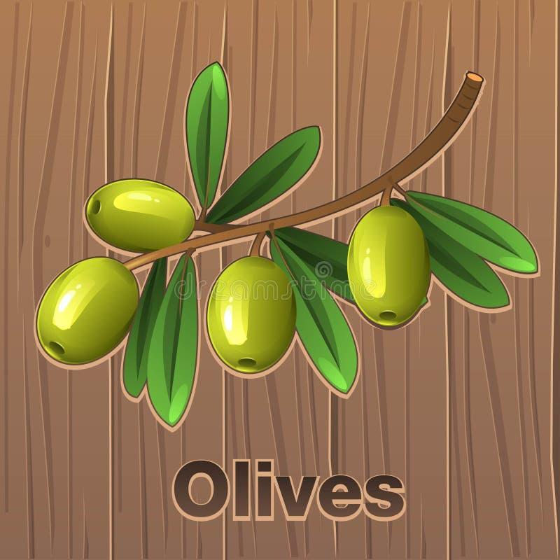 Aceitunas verdes en una ramificación ilustración del vector