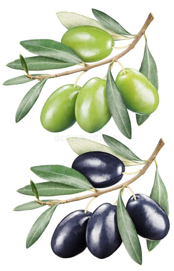 Aceitunas verdes y negras con las hojas ilustración del vector
