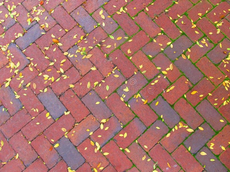 Acera con las hojas caidas foto de archivo libre de regalías