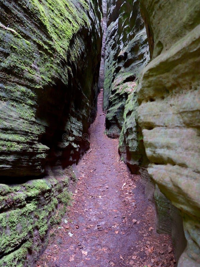 Acera a través de una grieta entre las rocas en el ¼ FF de Siewenschlà en el rastro de Mullerthal en Berdorf, Luxemburgo fotos de archivo