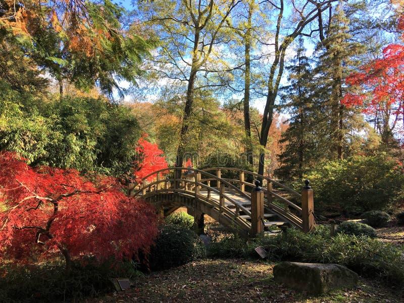 Aceri rossi accanto ad un ponte in un parco a Richmond, la Virginia fotografia stock