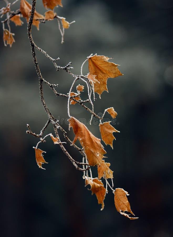 Acero congelato fotografie stock