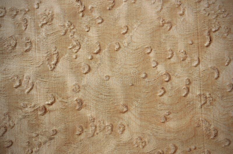 Acero di Birdseye - superficie di legno dell'impiallacciatura immagine stock libera da diritti