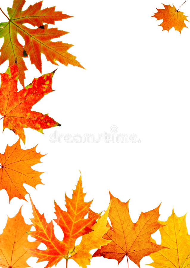 Acero-foglio di autunno illustrazione vettoriale