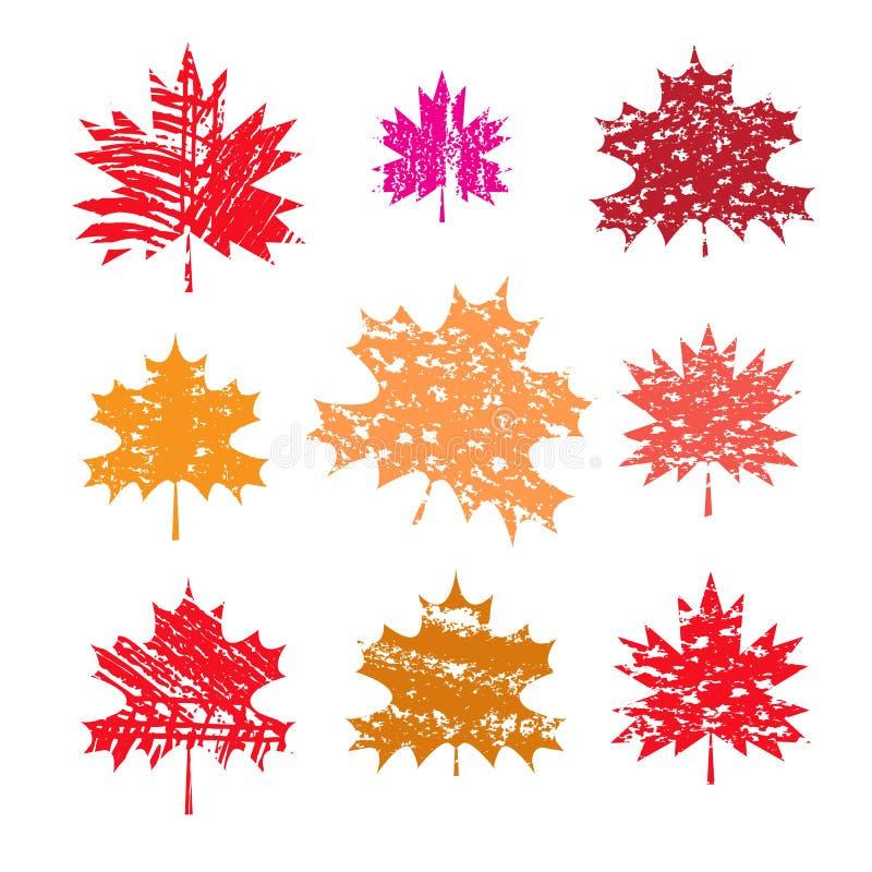 Acero leaves1 illustrazione vettoriale