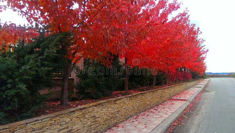 Acero rosso fotografia stock