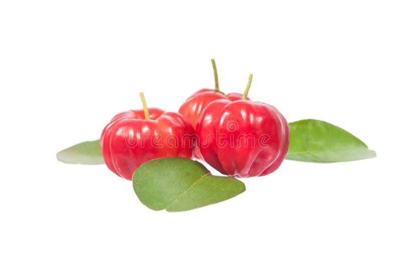 Acerola стоковое изображение