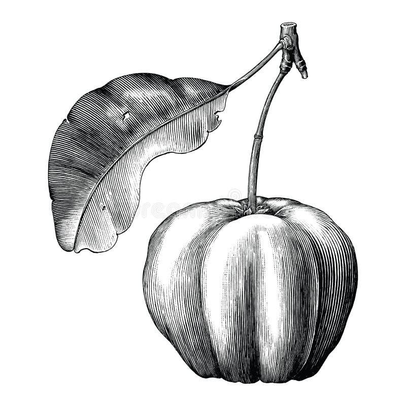 Acerola rocznika ręki remisu klamerki czereśniowa sztuka odizolowywająca na bielu plecy ilustracji