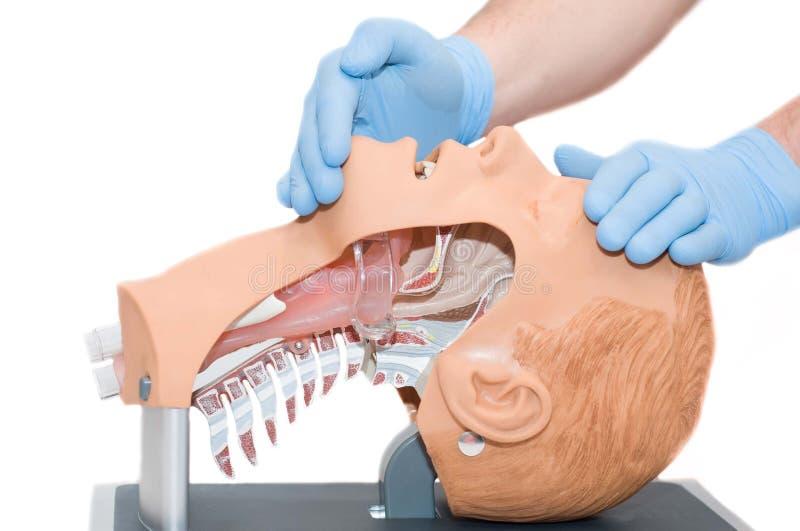 acesso da via aérea da manobra da Cabeça-inclinação o paciente inconsciente fotografia de stock