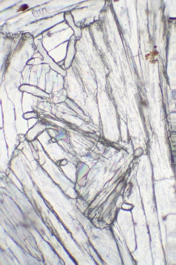 Acetaminophen под микроскопом стоковое фото
