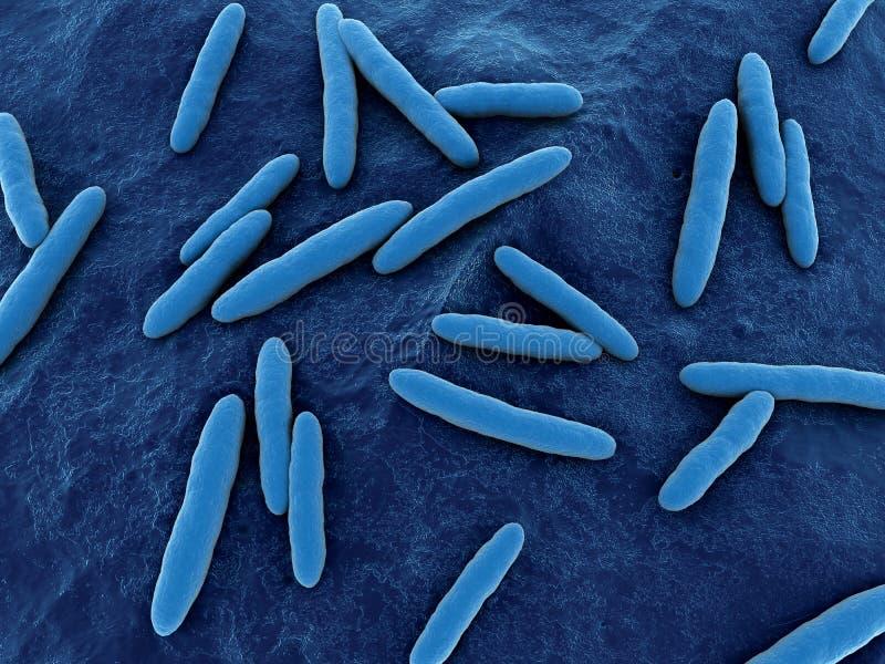 Acetobacter illustrazione di stock