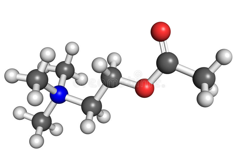 acetylocholiny molekuła ilustracja wektor