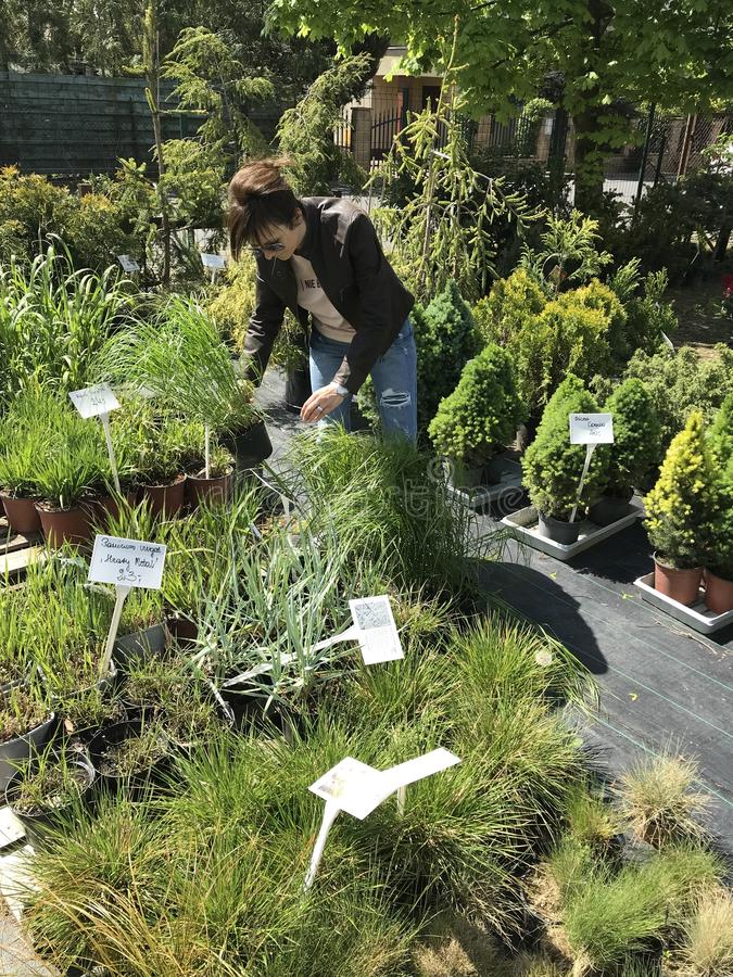 Achats de femme pour de nouvelles plantes et fleurs au jardinage et au vendeur ext?rieur d'usines image stock
