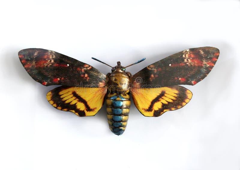 Acheronlia Atropas a Beautiful giant butterfly