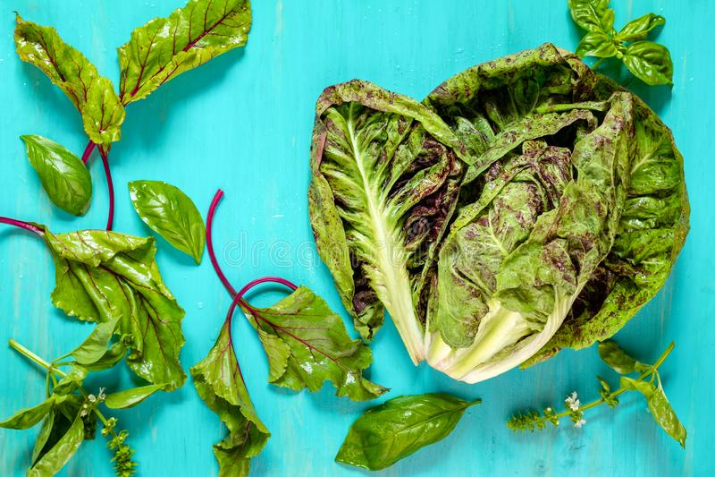 Achicoria de la lechuga, hojas de la remolacha y albahaca jovenes con descensos del agua fotos de archivo libres de regalías