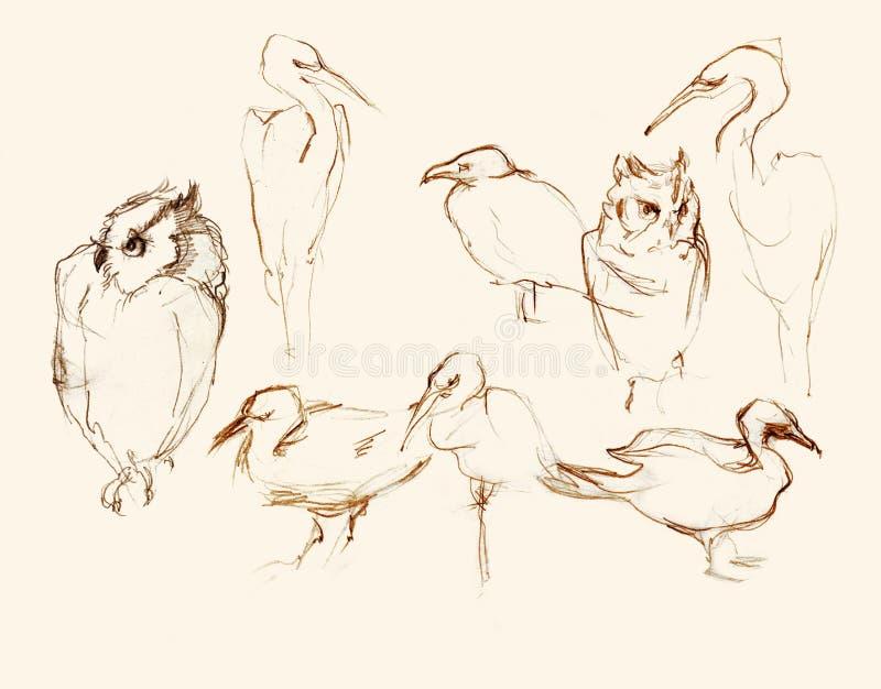 Acht artistieke schetsenillustratie van het vogelspotlood stock illustratie
