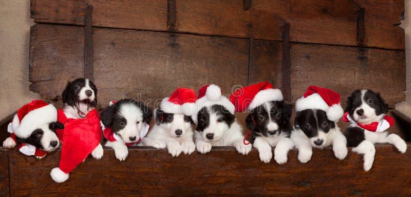 Acht Kerstmispuppy royalty-vrije stock afbeeldingen