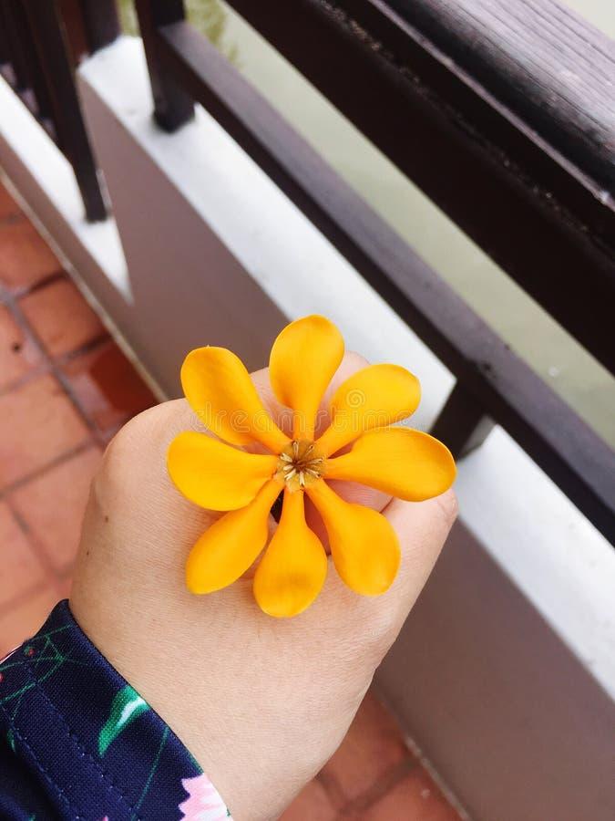 Acht Winkel der Blume lizenzfreie stockfotografie